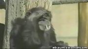 میمون سیگاری