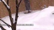 برف بازی بچه پاندا تو باغ وحش
