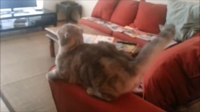 ببین گربه چه حالی می کنه . خنده دار و جالب کلیپ جالب .