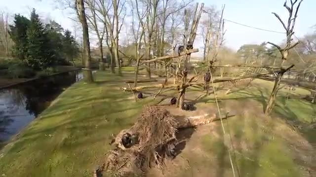 سرنگون کردن هواپیمای بی سرنشین پهپاد توسط میمون عصبانی