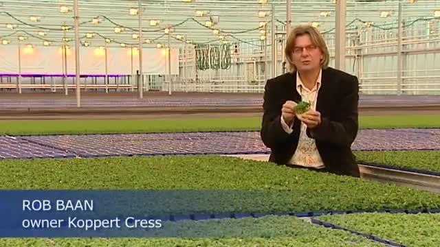 LED افزایش عملکرد گلخانه در هلند