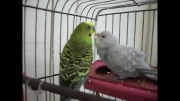 مرغ عشق--لطفا کلیپ عشق به یه سرخور رو هم ببینید.قشنگه