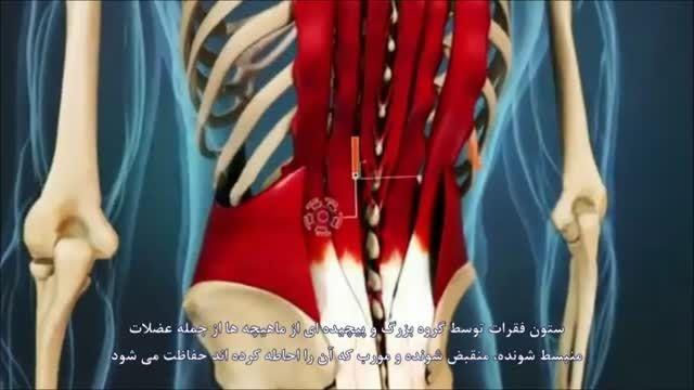 علت کشیدگی عضلات کمر و درمان آن
