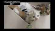 بچه گربه های دوست داشتنی :)