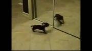 واکنش های حیوانات در برابر آینه ( پارت 5 )