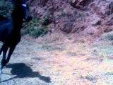 اسب دره شوری- کره شکار
