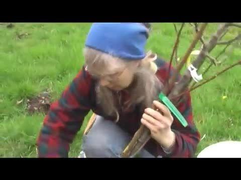 راهنمای کاشت یک درخت میوه
