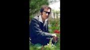 خواننده توحید رحمان خواه..نام ترانه زخم رفیق