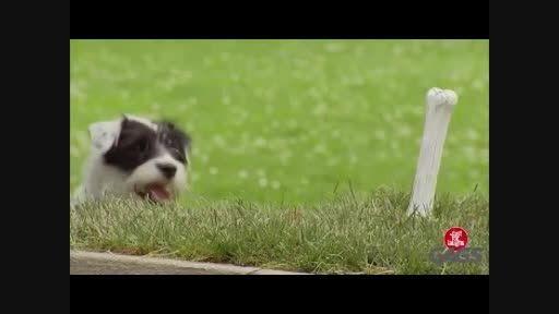 کلیپ بشدت خنده دار دوربین مخفی سگ آزاری درحد لالیگا