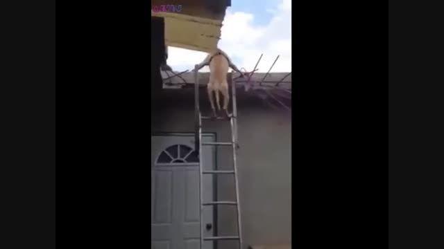 پایین آمدن سگ از نردبان فیلم کلیپ گلچین صفاسا