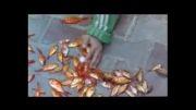 ویدئو کلیپ از فیلم آواز گنجشکها