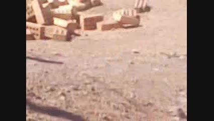 روستای فرخد جمع آوری سگهای ولگرد خیابان محقق12