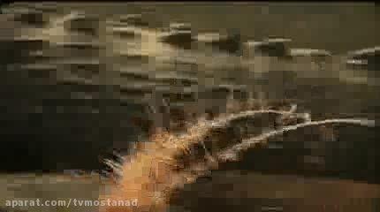 قسمت ۸ از مجموعه تمساح بان