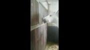 عشق دو اسب نسبت به هم چه قد می تونه عمیق باشه ؟