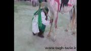 تعزیه شهادت حضرت علی اکبر  روستای طاق دامغان