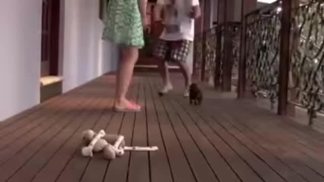 دفاع جانانانه سگ کوچولو از صاحبش