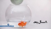بی آبی - ویدئو تنگ ماهی