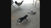 سکته کردن گربه