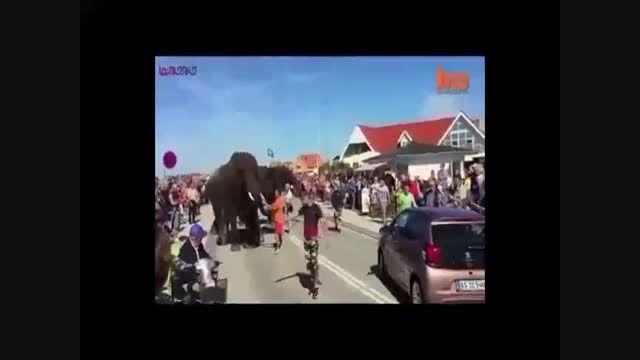 عصبانیت فیل ها+فیلم ویدیو کلیپ حمله حیوانات خشمگین
