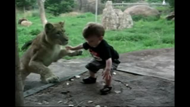 واکنش حیوانات باغ وحش به کودکان :)) HD