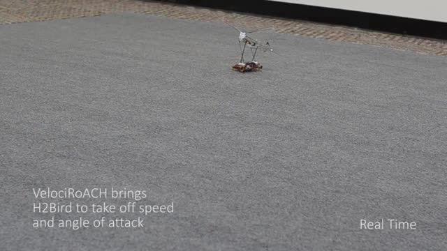 ربات سوسکی که یک ربات پرنده را به پرواز در می آورد