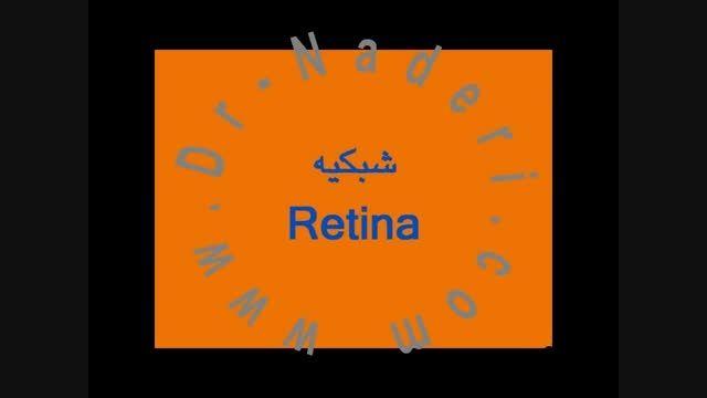 شبکیه -ساختمان چشم-مرکز چشم پزشکی دکتر علیرضا نادری