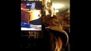 عکس العمل جالب گربه از دیدن تلویزیون.....