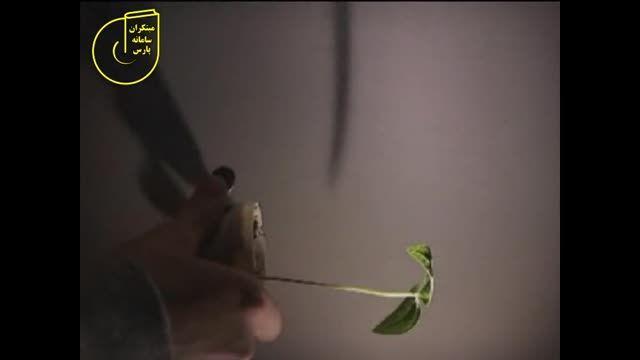 بررسی حرکتهای تنجشی گیاهان