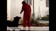بهترین ژرمن شپرد ایران، توتو