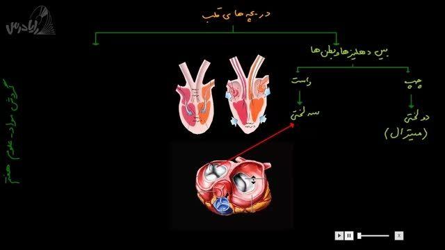 آموزش علوم هفتم-دریچه های قلب