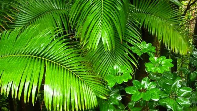 یک ساعت آرامش  در جنگل های بارانی استوایی