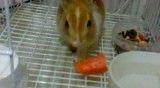 هویج خوردن خرگوش