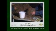 كشت گلخانه ای و پرورش قارچ