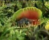 گیاه حشره رو می خوره