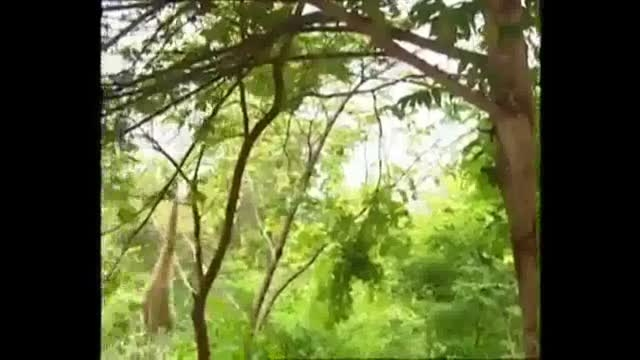 سر به سر گذاشتن ببرها توسط میمون بازیگوش