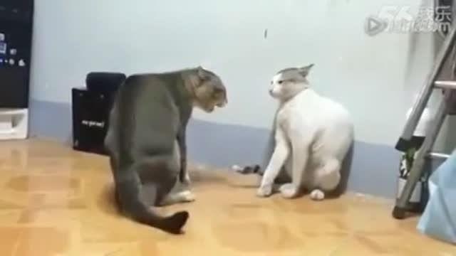 دعوای خیلی جالب دو گربه