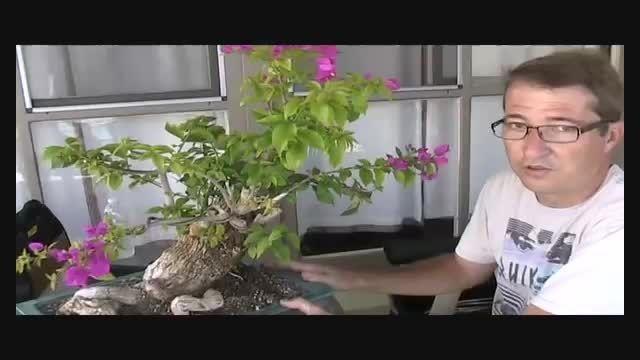 بذر گل کاغذی