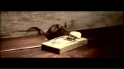 کلیپ طنز خیلی باحال تله موش ...