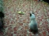 آموزش گربه آزاری ( تضمینی)