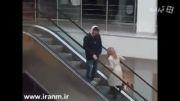 بالا رفتن دختر از پله برقی