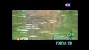 محمد ماملی | بارانه
