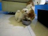 چه گربه نامردی!ببین چکار میکنه!!