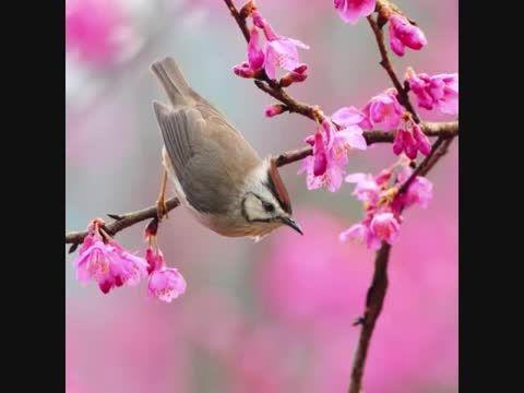 ترانه بهار بهار باد صدای ناصر عبداللهی