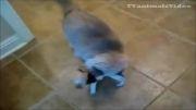 مجموعه شكست های سگ از گربه