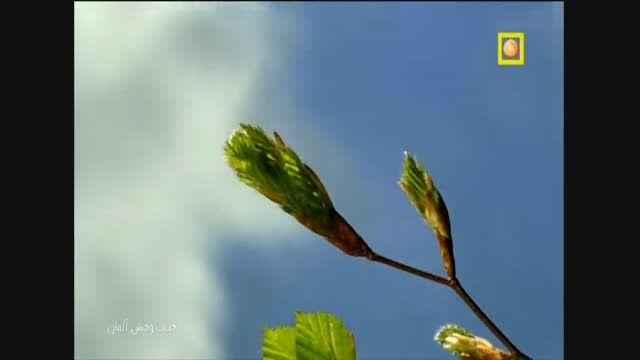 مستند حیات وحش آلمان با دوبله فارسی - جنگل ها