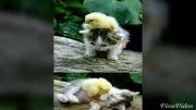 واقعا چی میشه گفت ن به این گربه چی بگیم بهتره شما بگین