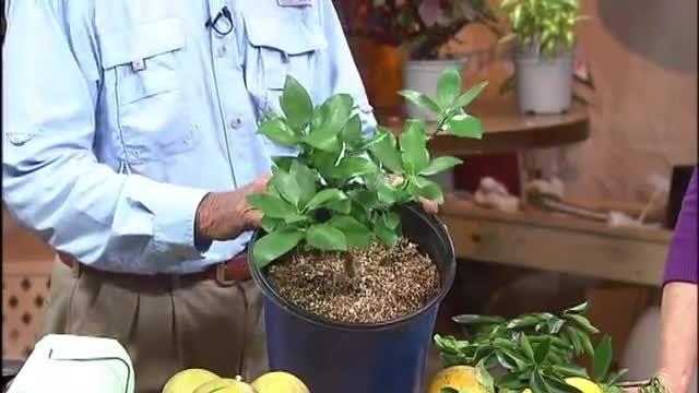 تدریس خصوصی باغبانی - مرکباتی مثل نارنج و پرتقال
