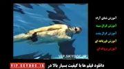 آموزش شنای کرال پشت به فارسی