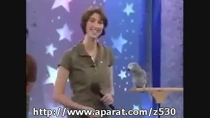 طوطی سخنگو