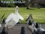رقص اردک و پرنده ها آخر طبیعت خنده دار